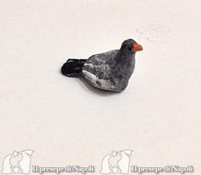 piccione per pastori cm 6,5-7
