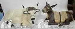 coppia di bue e asino seduti