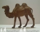 cammello alzato
